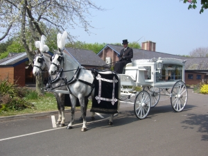 Image 1 - Horse & Carriage ~ White