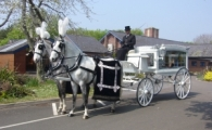 Horse & Carriage ~ White